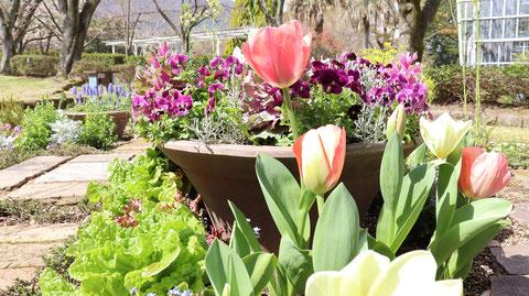 チューリップの庭園の写真フリー素材 Tulip Garden Photos Free Material