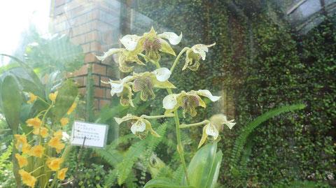 不思議な花の写真フリー素材 Mysterious flower photo free material