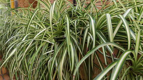 草造花の写真フリー素材 Grass Artificial Flower Photo Free Material