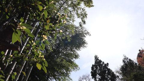 竹藪の写真フリー素材 Bamboo bush photo free material