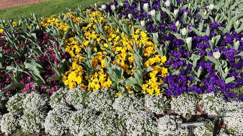 カラフルなお花畑の写真フリー素材 Colorful flower garden photo free material