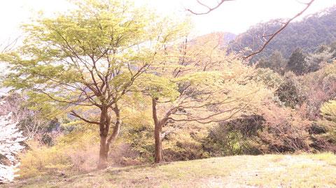 春、森林、木、山の写真フリー素材 Spring, Forest, Trees, Mountains Photos Free Material