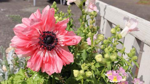 赤色の花の写真フリー素材 Red flower photo free material