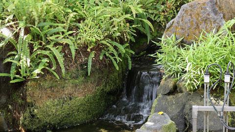 湧き水の写真フリー素材 Spring water photo free material