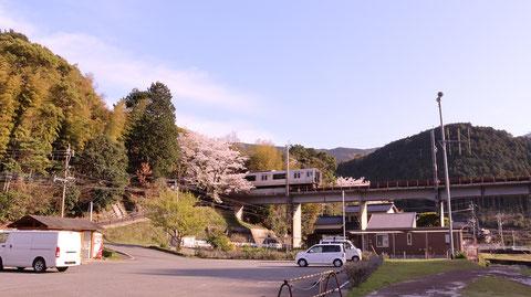 山、桜、電車、夕方、田舎の風景の写真フリー素材 Mountains, cherry blossoms, trains, evenings, countryside landscape photos free material