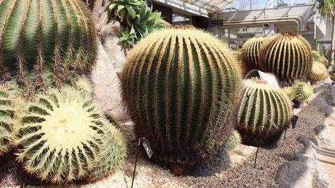 サボテンの写真フリー素材 Cactus Photo Free Material