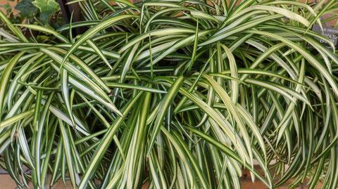 草の写真フリー素材 Grass Photo Free Material