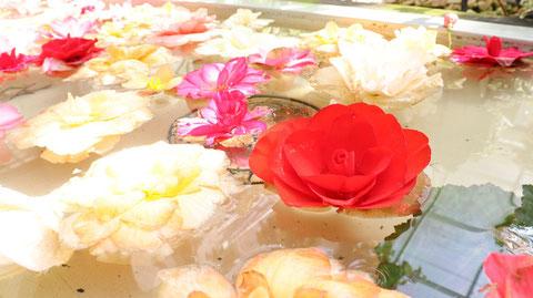 水に浮く花のフリー素材 Free material of flowers floating on water