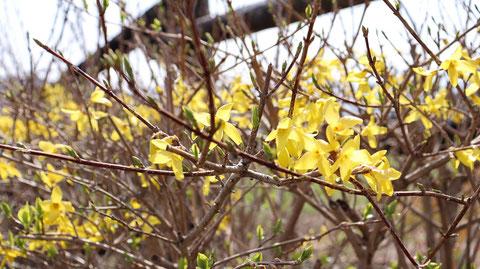 黄色い花の写真フリー素材 Winter Ranch Photo Free Material