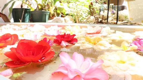 水に浮いてる花の写真フリー素材 Pictures of flowers floating in water Free material