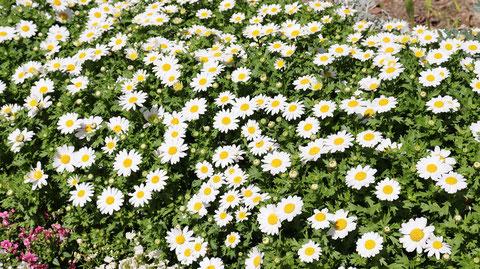 野草の写真フリー素材 Wildflowers Photos Free Material