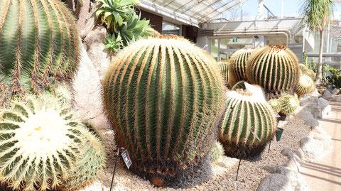緑のサボテンの写真フリー素材 Green cactus photo free material