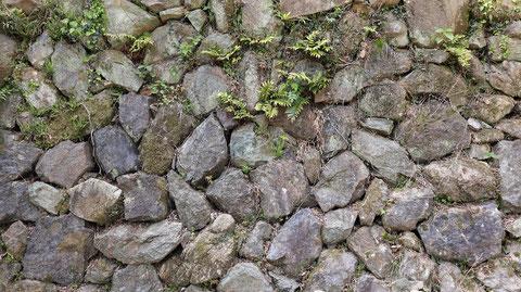 岩の壁、岸壁の写真フリー素材 Rock wall, quay photo free material