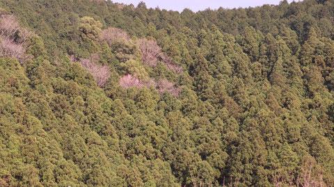 柄、春、森林、木、山の写真フリー素材 Pictures of patterns, spring, forests, trees, mountains Free material