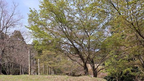 森の木の写真フリー素材 Forest Tree Photos Free Material