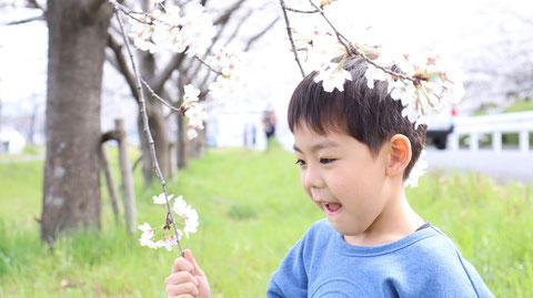 桜を見つめる子供の写真フリー素材 Children's photos looking at cherry blossoms Free material