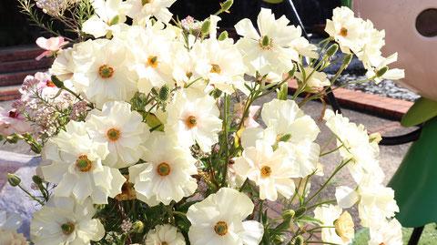 公園の白い花の写真フリー素材 Park White Flowers Photos Free Material