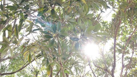 木漏れ日の写真フリー素材 Sunbeams photo free material