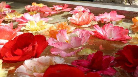 池に浮く赤い花のフリー素材 Free material of red flowers floating in the pond