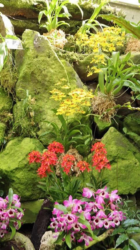 岩と花の写真フリー素材 Rocks and Flowers Photos Free Material