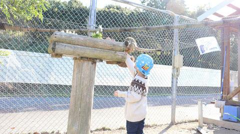 サルに餌をあげる子供