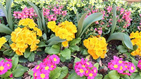 黄ピンク花の写真フリー素材 Yellow Pink Flower Photo Free Material