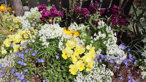 花壇の写真フリー素材 Flowerbed photo free material