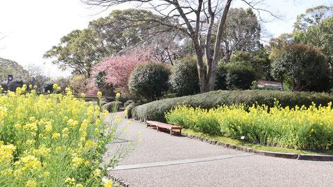 公園の風景写真フリー素材 Park landscape photo free material