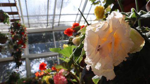花の写真フリー素材 Flower Photo Free Material