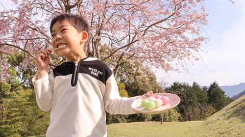 三色団子、花、花見、山、子供、桜の写真フリー素材 Three-color dumplings, flowers, cherry blossom viewing, mountains, children, cherry blossoms photo free material
