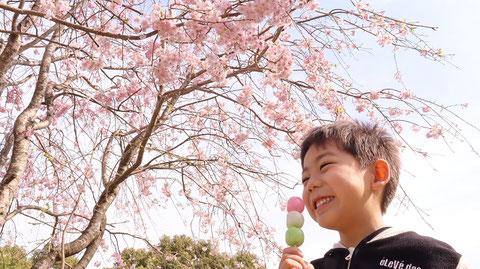 花より団子な子供の写真フリー素材 Pictures of children who are more dumplings than flowers Free material