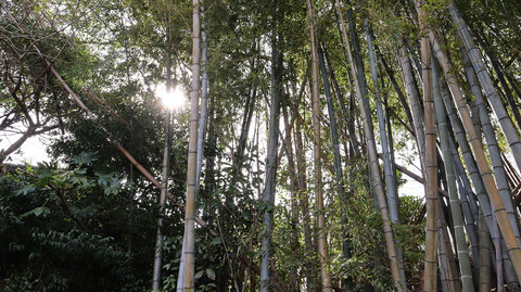 山の中の竹林の写真フリー素材 Photos of bamboo grove in the mountains Free material
