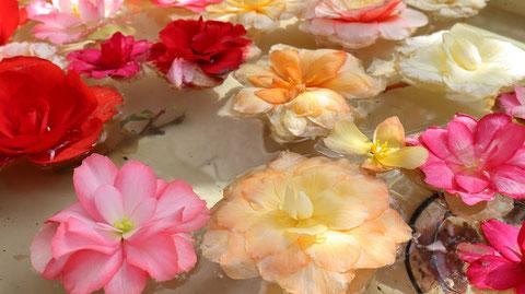 池に浮く花のフリー素材 Free material of flowers floating in the pond
