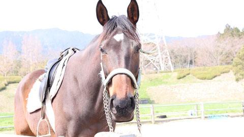 牧場、家畜、馬、ポニー、動物の写真フリー素材 Pictures of ranch, livestock, horse, pony, animal free material