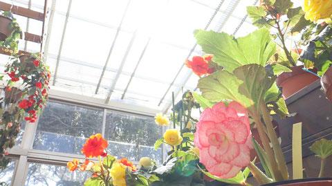 鉢植えの写真フリー素材 Potted photo free material