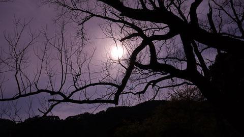 暗い、怖い、枯れ木、お化け、森林、木、山の写真フリー素材 Dark, scary, dead trees, ghosts, forests, trees, mountains photos free material