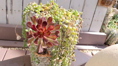 結晶花の写真フリー素材 Crystal flower photo free material