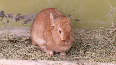 ウサギ、うさぎ、兎、ペット、哺乳類、動物園、動物の写真フリー素材 Rabbits, Pets, Mammals, Zoos, Animals Photos Free Material