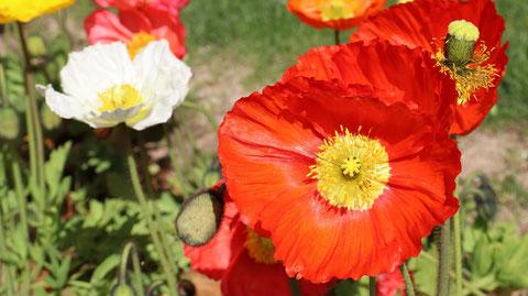 赤い花びらの写真フリー素材 Red Petals Photos Free Material
