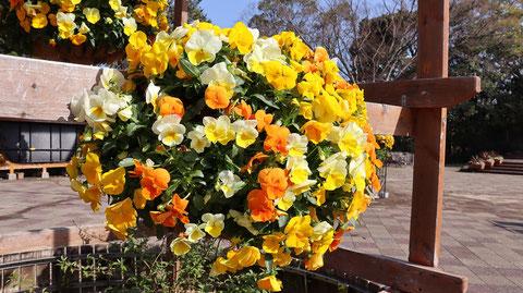 黄色い花オレンジ色の花の写真フリー素材 Yellow Flowers Orange Flowers Photos Free Material