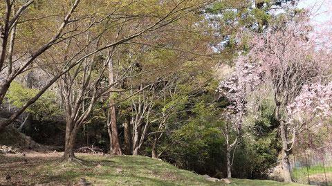 森の木と桜の木の画像フリー素材 Forest tree and cherry tree image free material