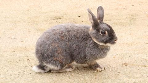 ウサギのフリー素材 Rabbit Free material