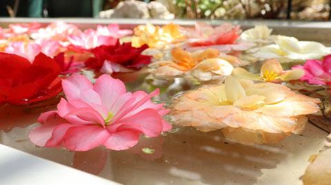 水に浮いてるピンクの花フリー素材 Pink flower free material floating on water