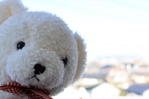 くまのぬいぐるみフリー素材 Bear plush toy free material