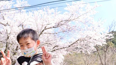 桜の記念撮影の写真フリー素材 Photo free material for commemorative photo of cherry blossoms