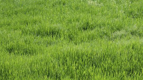 草むらの写真フリー素材 Grass Photo Free Material