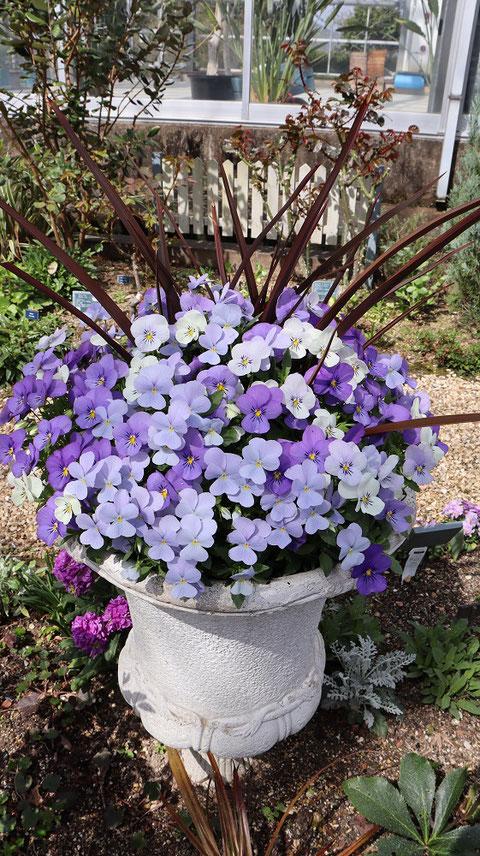 紫色の花の写真フリー素材 Purple flower photo free material