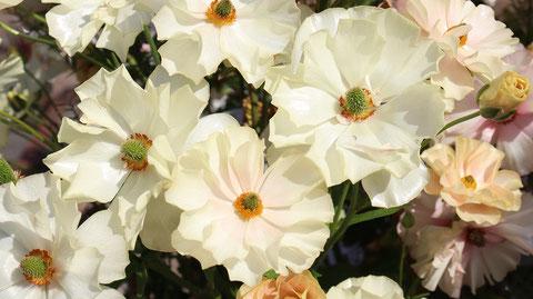 白い花の写真フリー素材 White flower photo free material