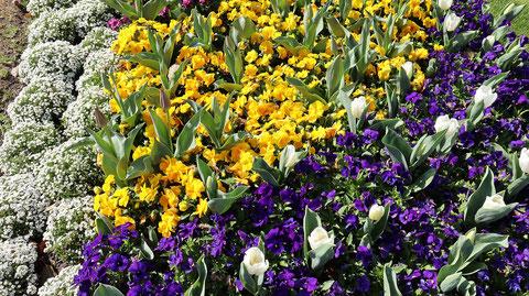 お花畑の写真フリー素材 Flower field photo free material