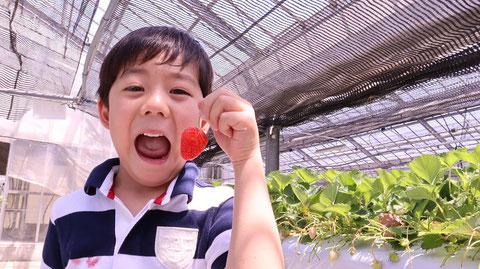 苺、いちご狩り、果物、フルーツ、子供、晴れ、農園、マスク、写真フリー素材 Strawberry, strawberry picking, fruit, fruit, kids, sunny, plantation, mask, photo free material